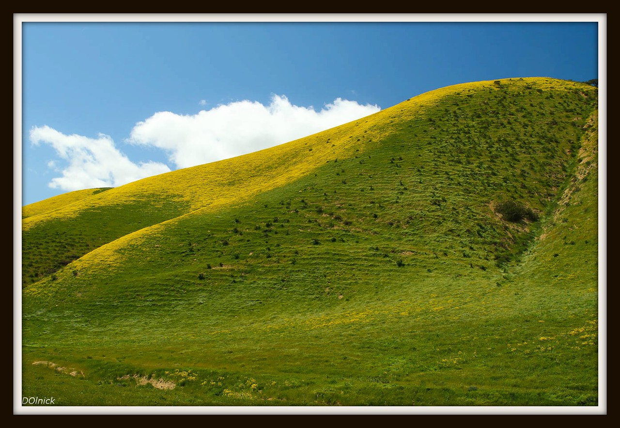 Carrizo National Monument, Central CA.  Superbloom of 2017