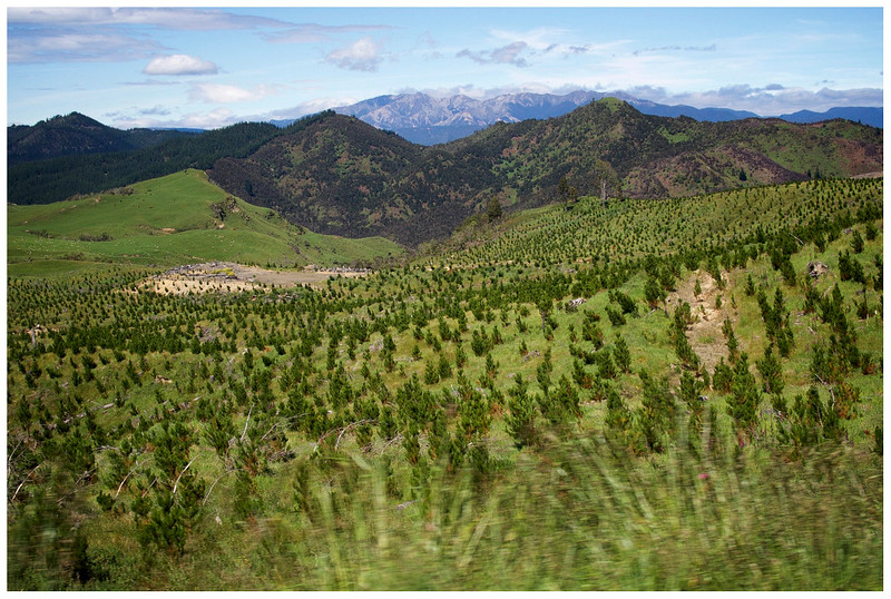 Between Napier and Taupo