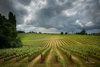 Vineyards, Gers