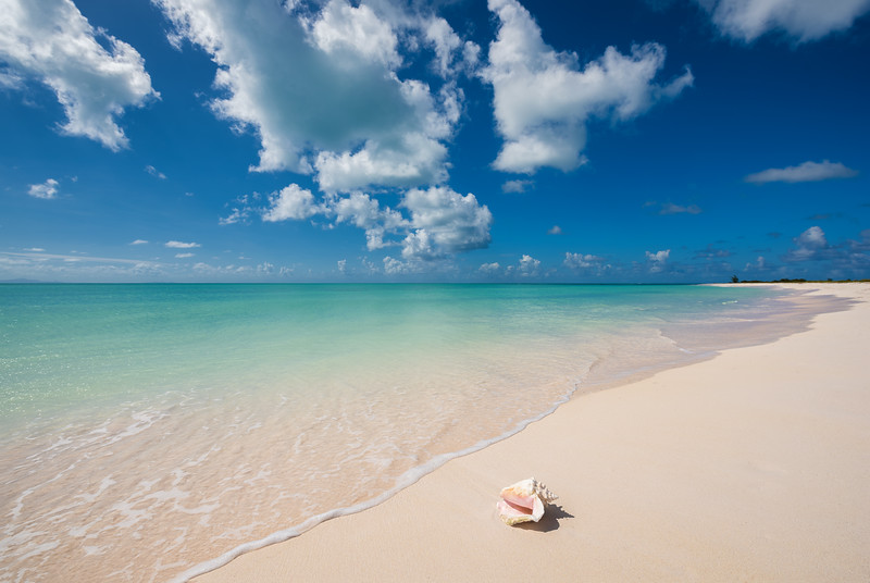 Conch Shell on Beach - Anegada, BVI