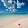 Conch Shell on Beach - Anegada, BVI