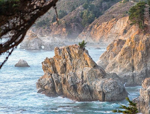 Rock Tree - Big Sur