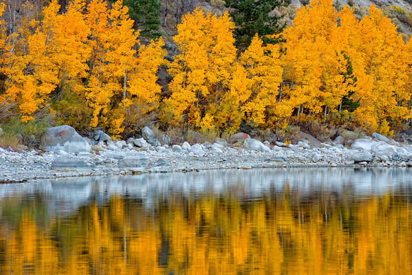 Fall Colors - June Lake