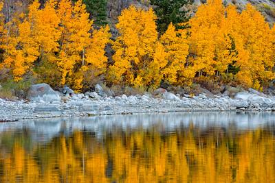 Fall Colors - June Lake
