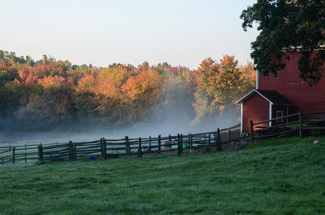 Morning on the Farm