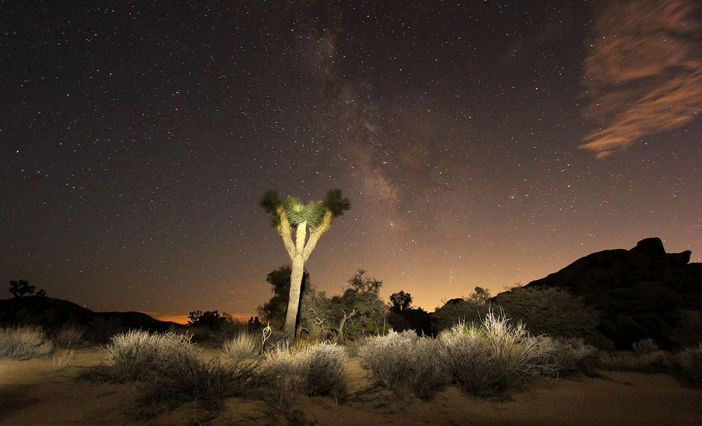 Joshua Tree Under the Milkyway