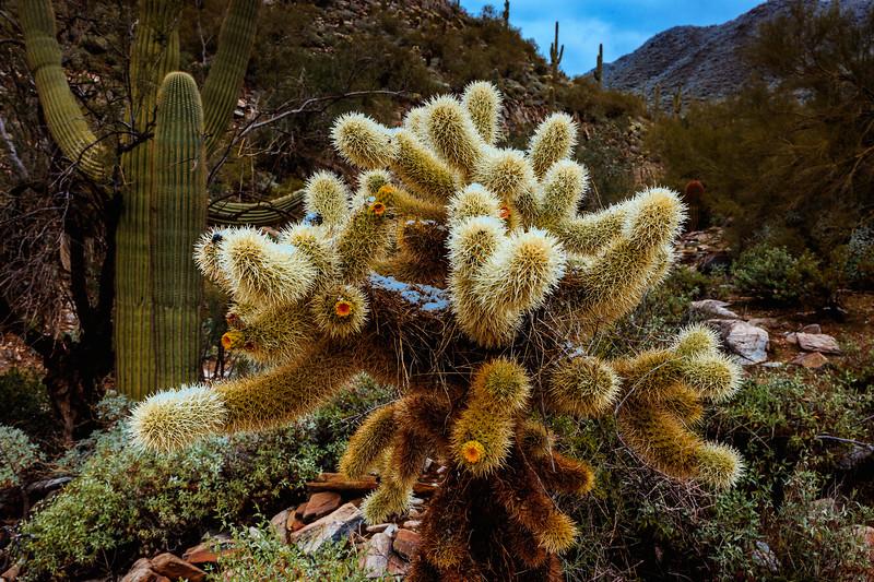 New Years Cactus-7627
