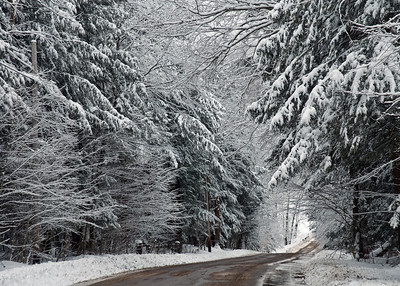 Snowy trees on red road