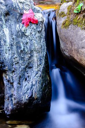 A fallen maple leaf nestled on a rock in Workman Creek