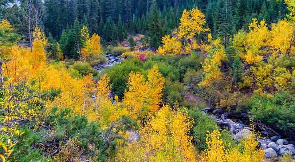 Deadman Creek Morning Fall Colors - Sonora Pass-9