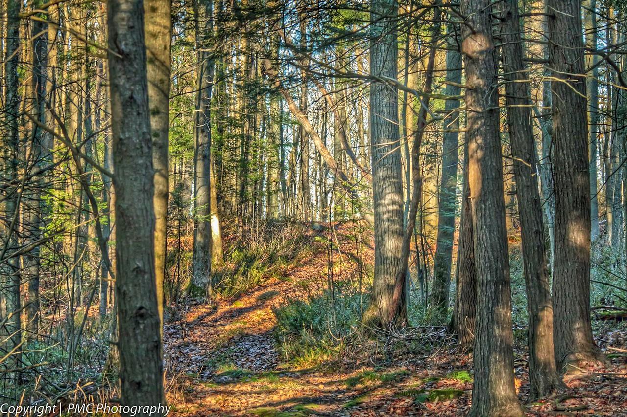 Summerstown Forest