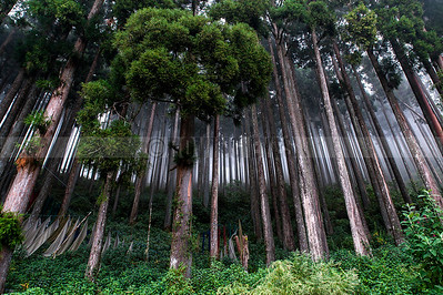 A6:The misty woods in Lamahatta,a small village near Darjeeling,West Bengal