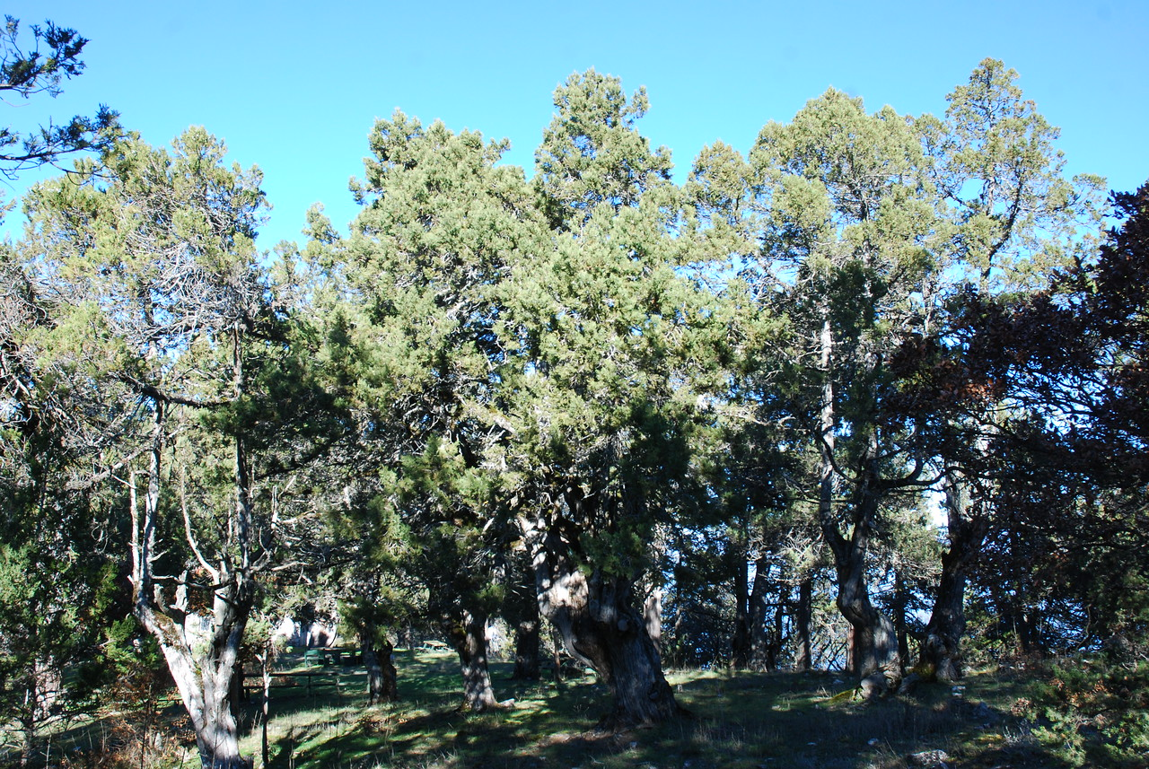 Juniperus Forest - St. George