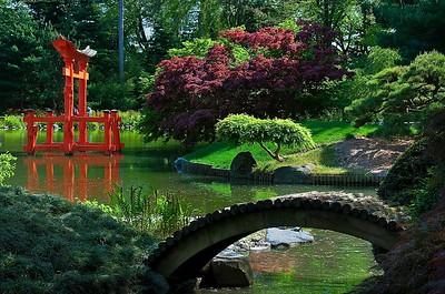 Japanese Garden @ the Brooklyn Botanical Gardens