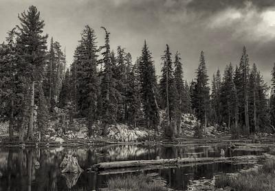 Sequoiasbw