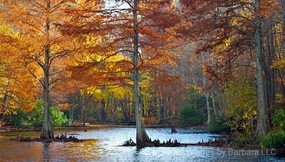 Fall Woods in Hampton