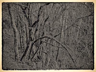 Ghosty Woods