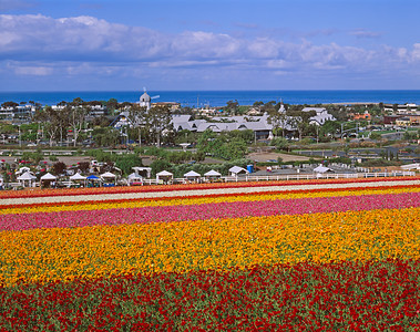 Carlsbad Flower Fields, 2006 #2