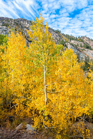 Deadman Creek Fall Colors - Sonora Pass-5