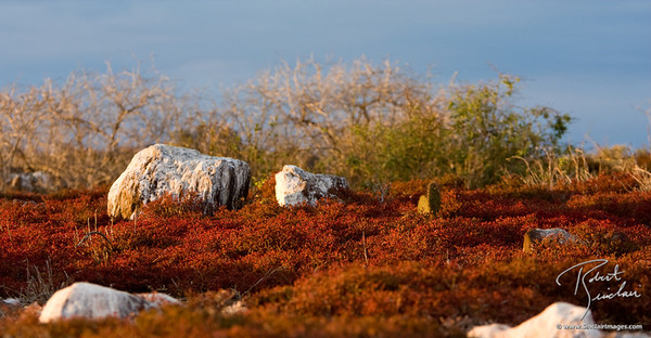 Tapestry of Color in the Galapagos