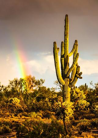 Saguaro Rainbow v2