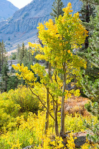 Deadman Creek Fall Colors - Sonora Pass-2