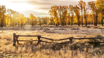 Timeless Autumn Morning.