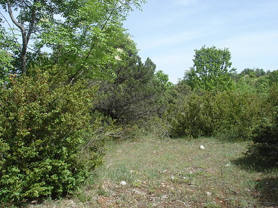 Mixed open Juniper forest