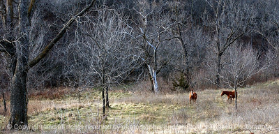 015-horse_pasture-madison_co-04dec04-c2-cc-6298