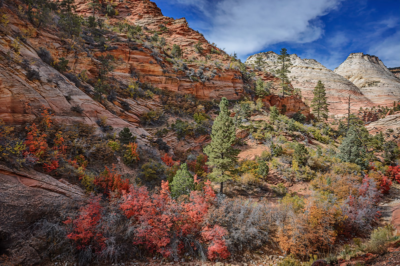 Fall colors and sandstone rock formations along Highway 9 near the entrance to Zion National Park, Utah