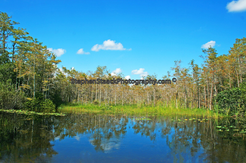 Florida landscape.