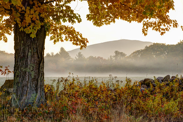Mount Kearsarge  & the Golden Maple