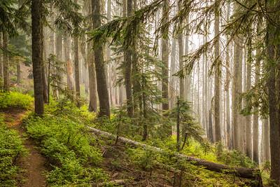 Henry M Jackson Wilderness