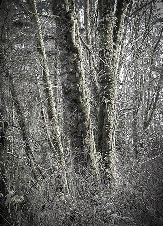 Mossy Tree - Black & White