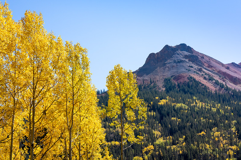 Aspens and Red Mountain