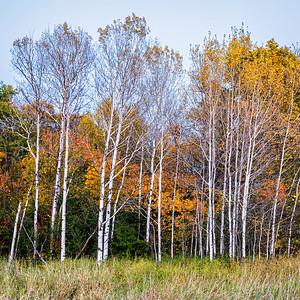 Woods & Wetlands