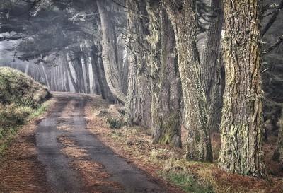 Foggy Drive, Mendocino County, California