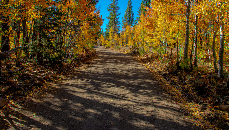 Road Through the Aspens