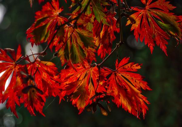 Autumn Lights