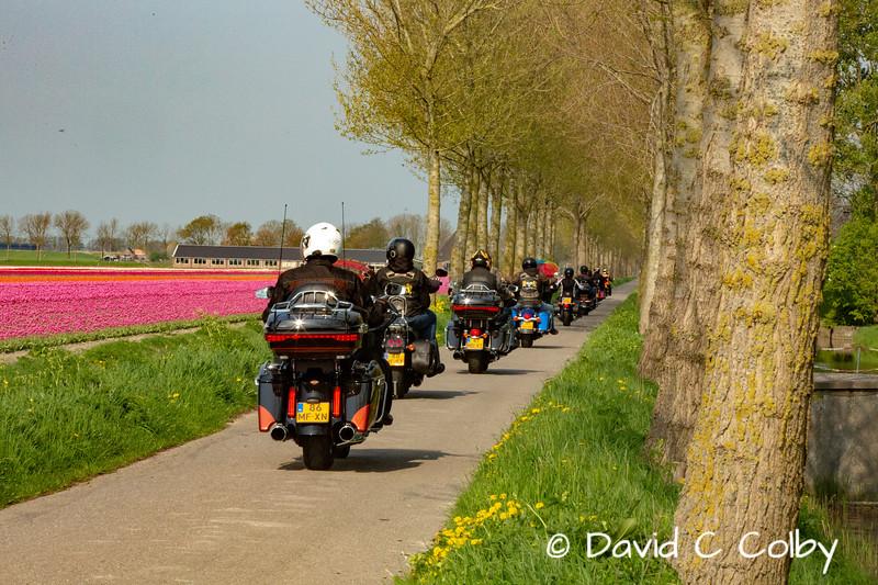 Even Bikers Love Tulips