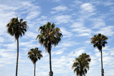Palm Trees with Clouds