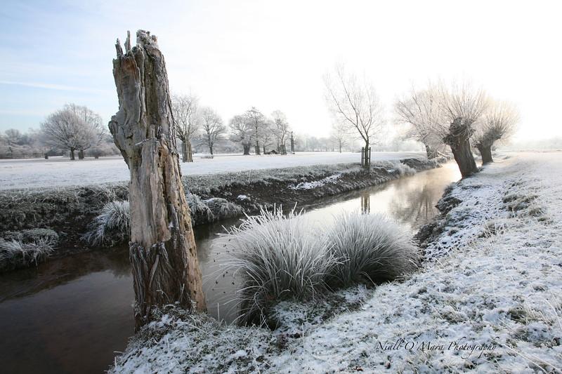 Richmond Park on a frosty morning