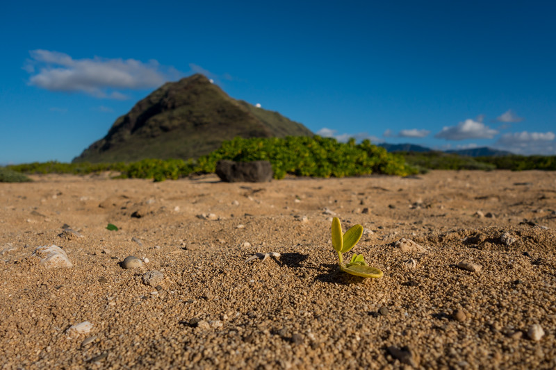 A different perspective from the tip of Oahu