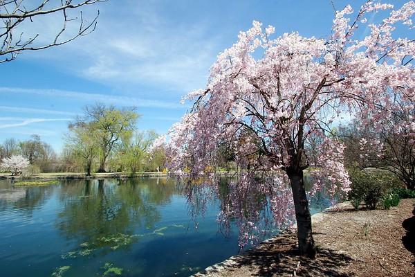 Spring In Nashville, Tennessee
