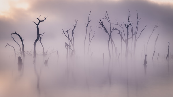 Ghosts in the Mist