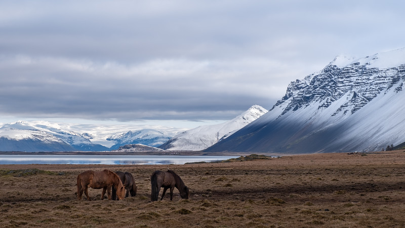 Horses - Iceland Tour 2018