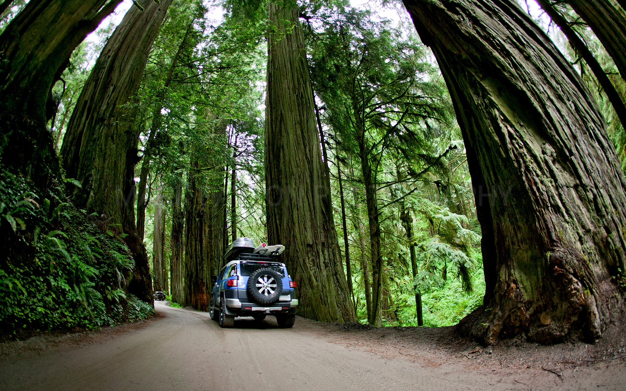 Driving through Giants<br /> <br /> Driving through giant redwoods near Crescent City, California.<br /> <br /> Canon 1Ds MK I<br /> Canon EF 15mm f/2.8 Fisheye