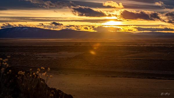 Sheepy Sunset