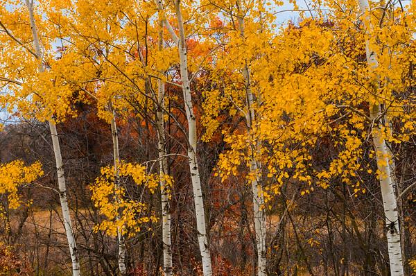 Forest & Woodlands