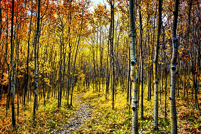 Fall in Paskapoo Slopes